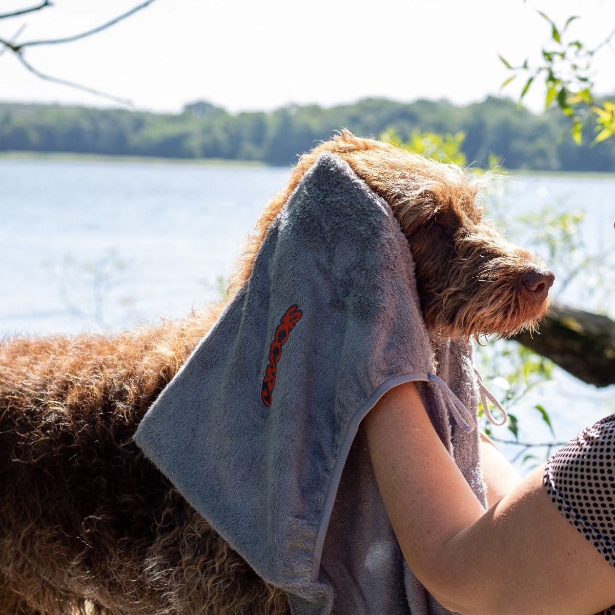 siccaro easydry towel img 2306 by siccaro Pepper Paws Pepper Paws